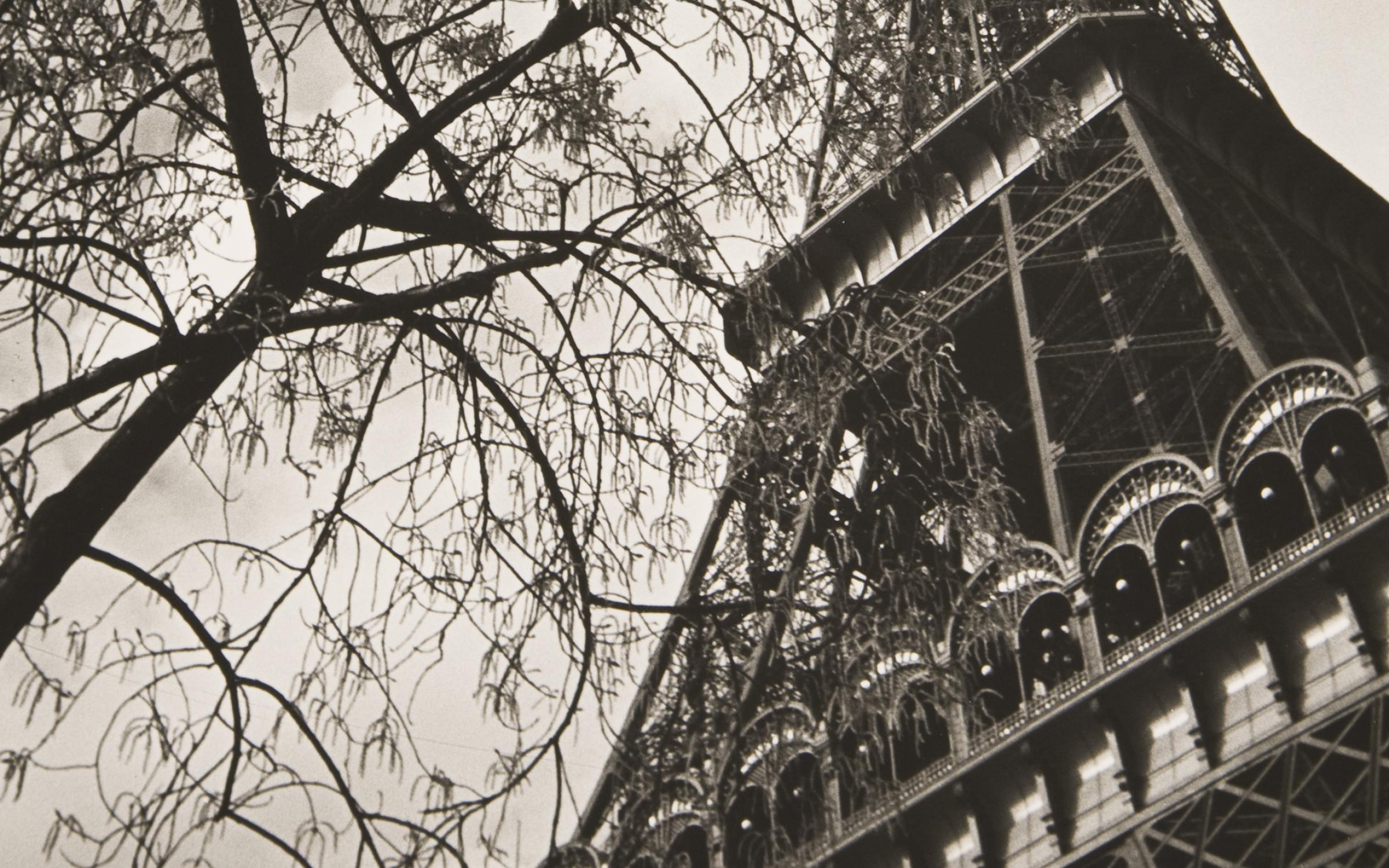 Ilse Bing (German, 1899-1998), Paris, Eiffel Tower with Branches, 1933, printed 1993, gelatin silver print, 13 7/16 in x w: 8 15/16 inches, gift of Dr. Steven K. and Yasemin Miller, UMFA2012.11.8.